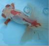 Cimg9671a
